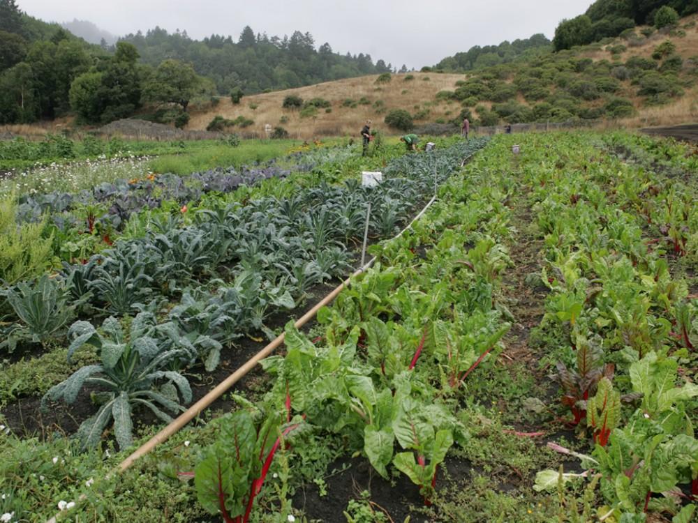 Marin Organics