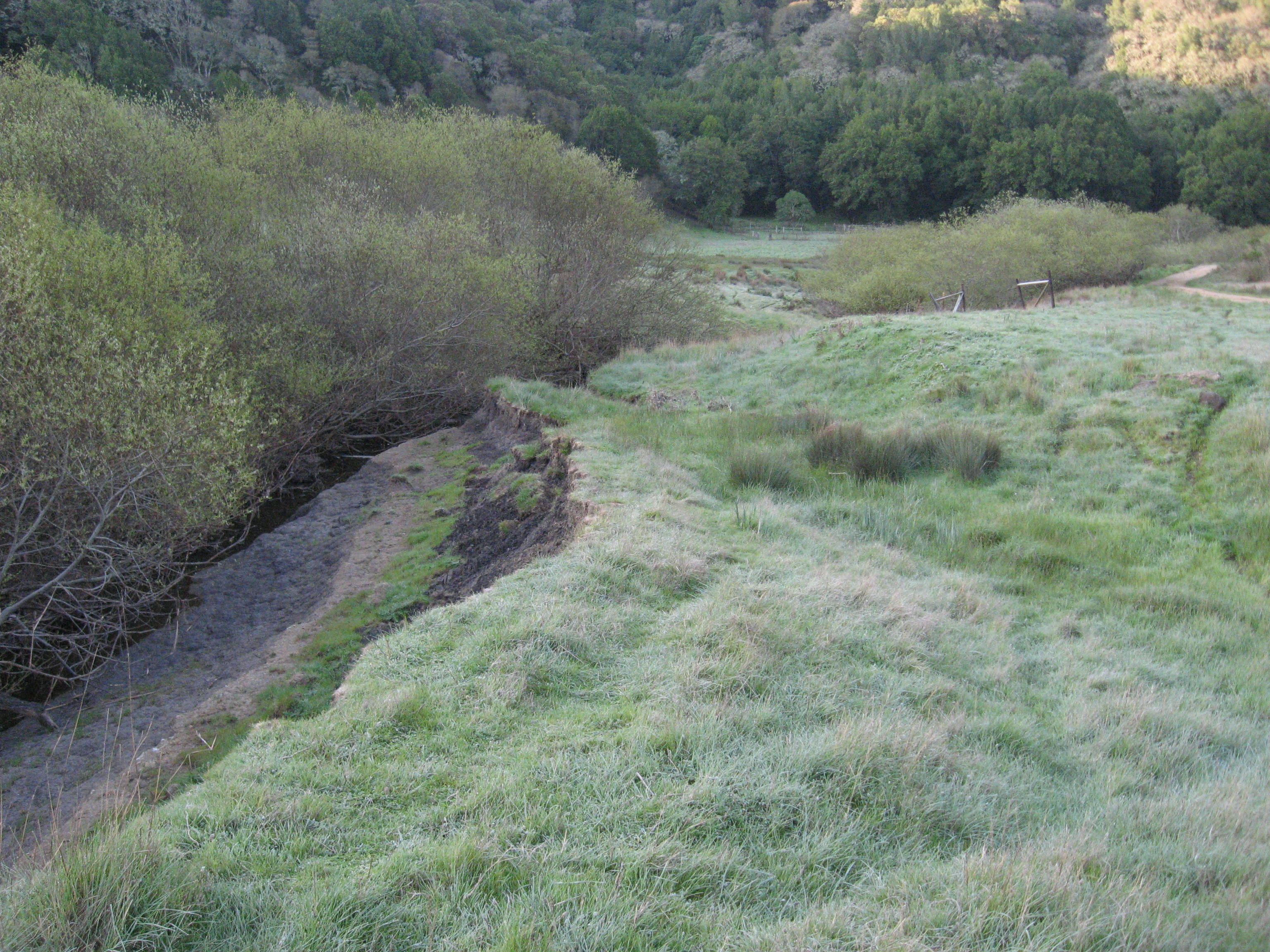 streambank restoration_before_barboni