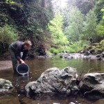 Releasing Steelhead Smolts
