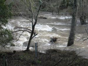 Stream Gage in Samuel P Taylor State Park at 2,500 cfs