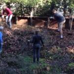 removing non-native invasive plants