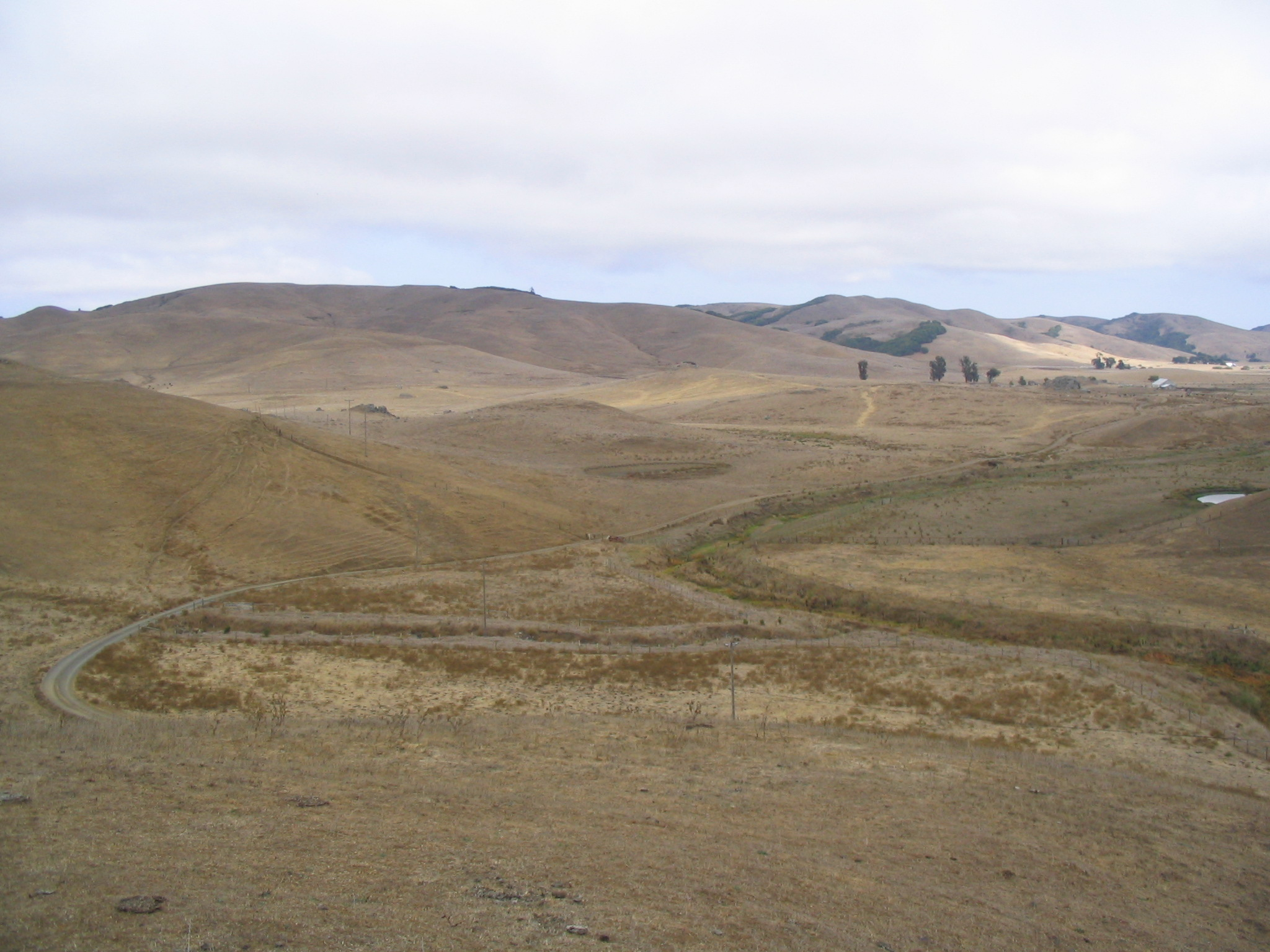 A bright but clouded day in the Marin hills is shown. All the fields and hills are brown (indicating season), with some patches of trees and shrubs. In the foreground, a flat part of the landscape shows a road curving around what seems like a dried-up stream. No large plants grow by the stream.