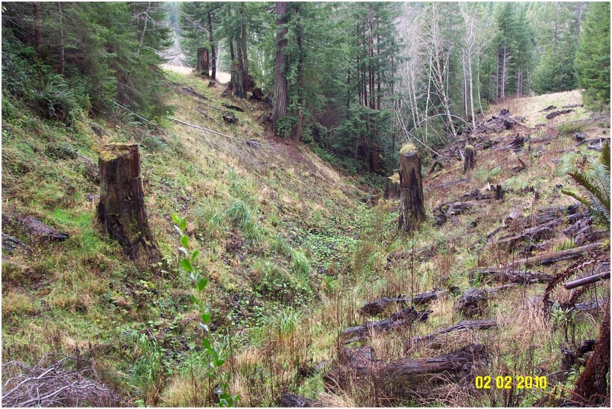 In the same steep bank area, vegetation has started to grow, and it no longer looks like it is under construction.