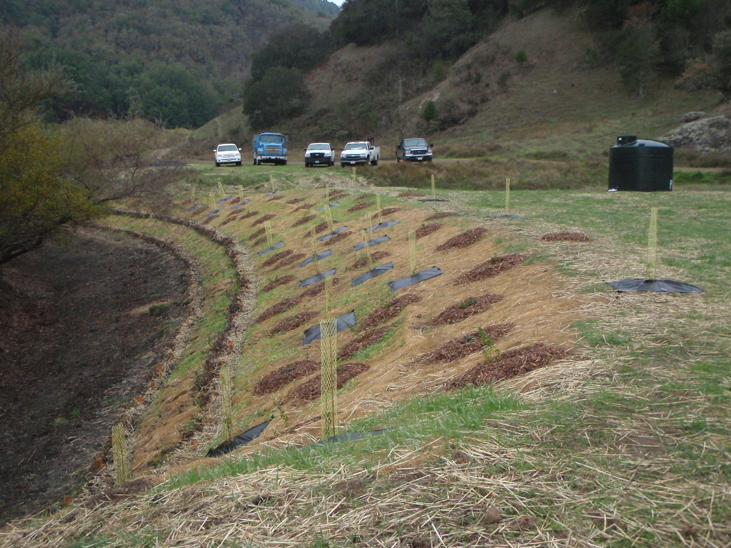 A side angle view of the bank shows an organized planting pattern with small plants installed. In the background are 5 trucks that look related to the planting operation.  Caption: Another view of the willow revetment constructed by Furlong Construction provides bank stability on a tributary to Soulajule Reservoir.
