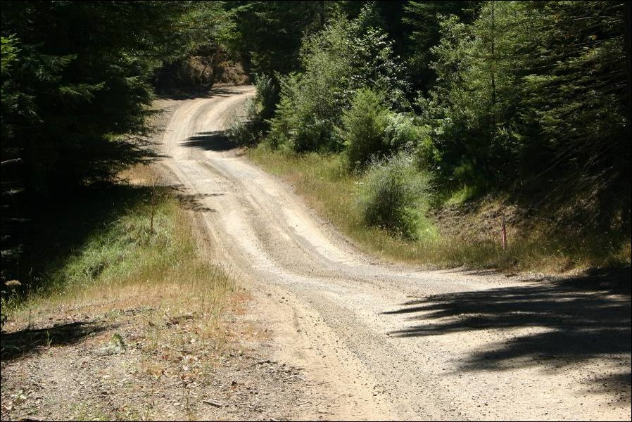A smooth road with two rolling dips in a forested area.