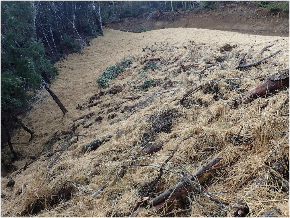 This bank has been fixed by a re-grading. It now slopes gently and evenly away from the road.